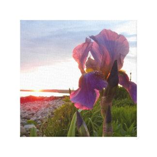 Iris at Sunset II Canvas Print