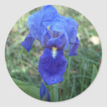 Iris azul 5 pegatina redonda