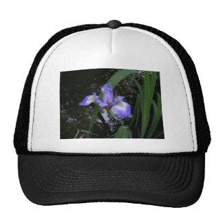 Iris azul de LaChrista en arroyo Gorros Bordados