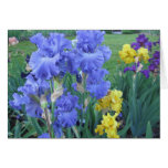 Iris azul felicitacion