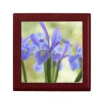 Iris azul joyero cuadrado pequeño