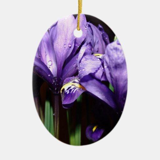 Iris azul ornatos