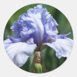 Iris-azul Pegatinas Redondas
