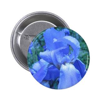 Iris azul pin