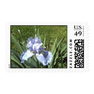 iris azul sellos