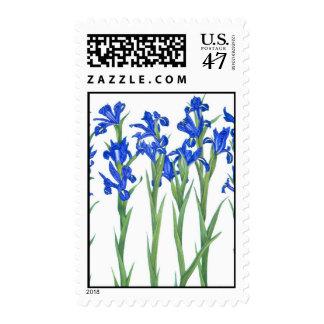 Iris azul sellos postales