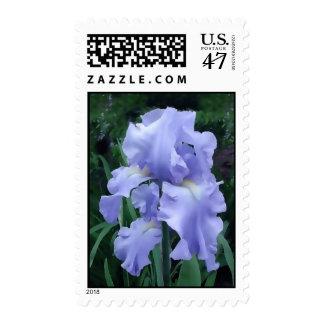 Iris azul timbre postal