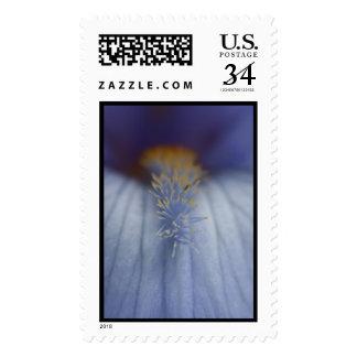 Iris azul y amarillo de BLYE Franqueo