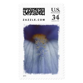 Iris azul y amarillo de BLYE Sellos Postales