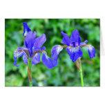 Iris azules - tarjeta de felicitaciones en blanco
