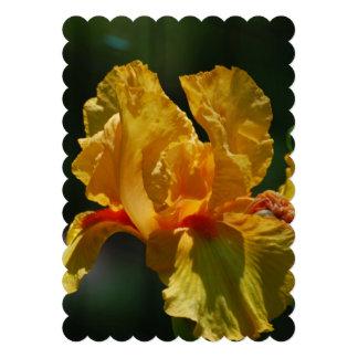 Iris barbudo amarillo