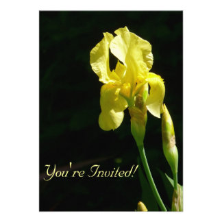 Iris barbudo amarillo Invitiation