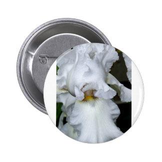 Iris barbudo en blanco pins