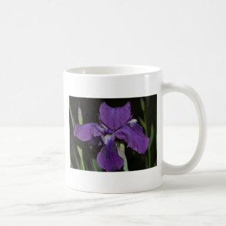 Iris barbudo en púrpuras taza de café
