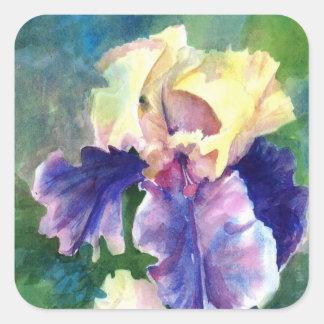 Iris barbudo gigante pegatina cuadrada