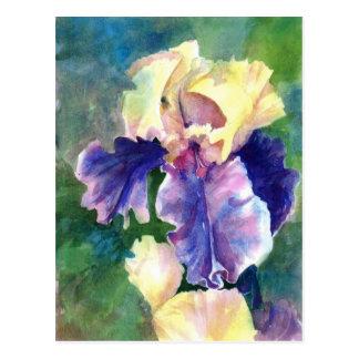 Iris barbudo gigante tarjetas postales