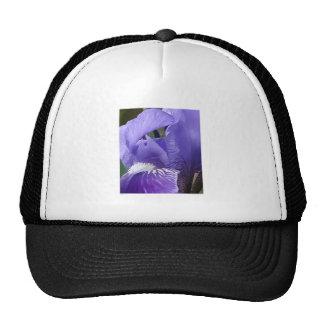 Iris barbudo gorros bordados