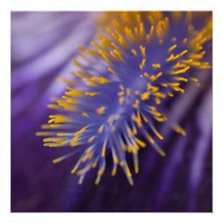 Iris barbudo anuncio personalizado
