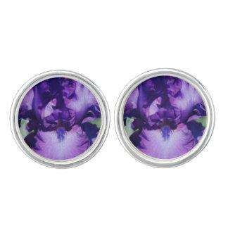 Iris barbudo púrpura gemelos