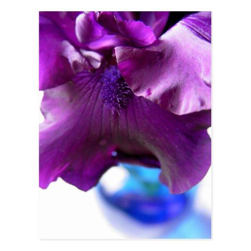 Iris barbudo púrpura oscuro en postal del florero