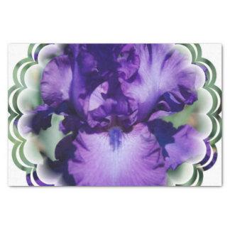 Iris barbudo púrpura papel de seda pequeño