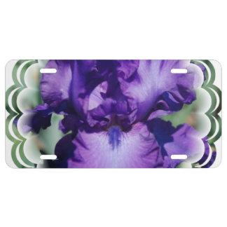 Iris barbudo púrpura placa de matrícula