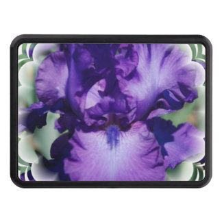 Iris barbudo púrpura tapas de remolque