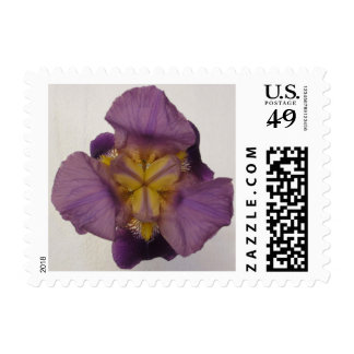 Iris Bearded Purple Stamp