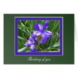 Iris Beauty Greeting Card