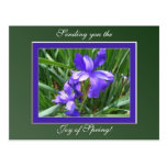 Iris Beauty Postcard