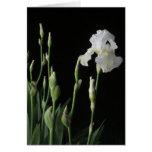 Iris blanco en la oscuridad de la noche felicitaciones