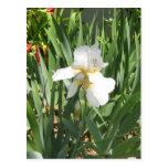 Iris blanco postal