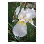 Iris blanco tarjetas