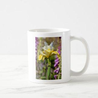 Iris blanco y amarillo taza de café