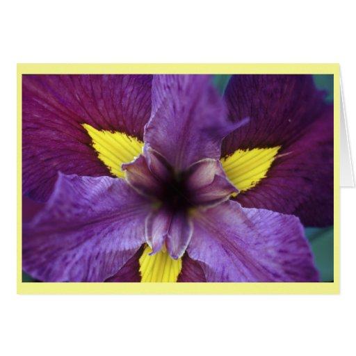 iris bloom card zazzle. Black Bedroom Furniture Sets. Home Design Ideas