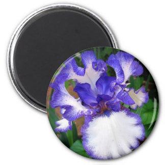 Iris ~ Blue and White 2 Inch Round Magnet