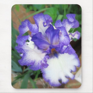 Iris ~ Blue and White Mouse Pad