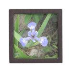 Iris Blue Flag Flower Keepsake Box