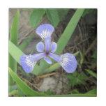 Iris Blue Flag Flower Tile