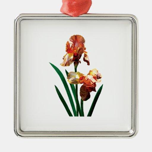 Iris bronceados ornamento de reyes magos