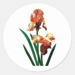 Iris bronceados pegatina redonda