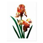 Iris bronceados postal