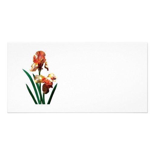 Iris bronceados tarjetas con fotos personalizadas