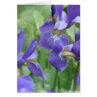 Iris Bulbs Greeting Card