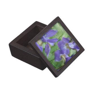 Iris Bulbs Premium Gift Box