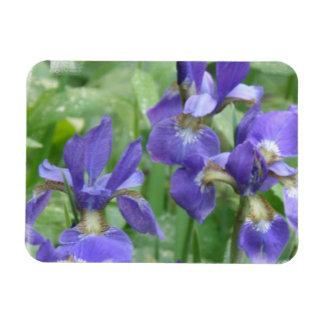 Iris Bulbs  Premium Magnet Rectangle Magnet