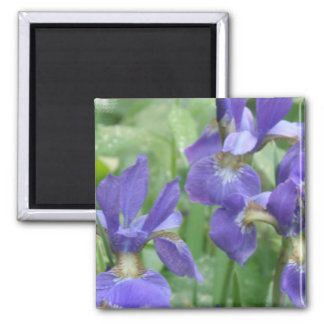 Iris Bulbs Square Magnet Magnet