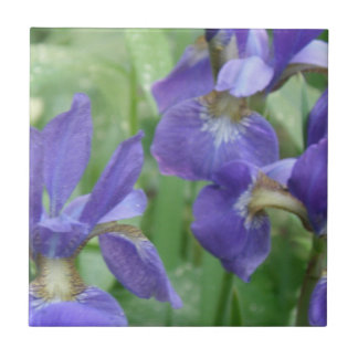 Iris Bulbs  Trivet
