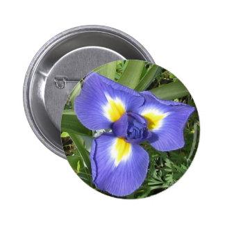Iris Buttons