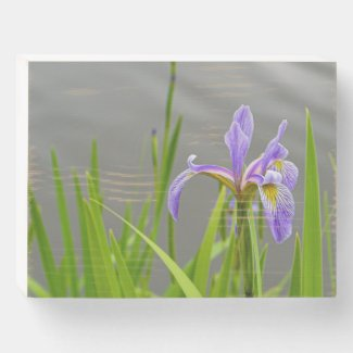 Iris by Lake Wooden Box Sign